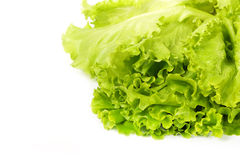 Fresh salad lettuce Stock Image