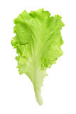 Fresh salad lettuce Royalty Free Stock Photos