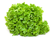 Fresh Salad Lettuce Stock Photo