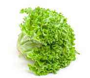 Fresh Salad Lettuce Stock Photography
