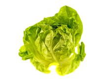 Fresh salad lettuce Stock Photos