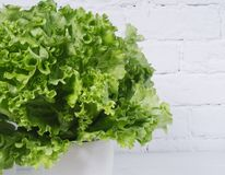 Fresh salad lettuce leaves on a background of white brick wall horizontal isolated stock image