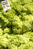 Fresh salad lettuce for sale Stock Photos