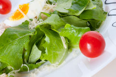 Fresh salad with lettuce and tomatoes Royalty Free Stock Photography