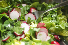 Fresh salad with mint and radishes Royalty Free Stock Image