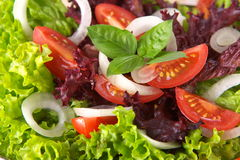 Fresh salad with onion tomato and basil Royalty Free Stock Photo
