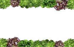 Fresh Salad photo frame isolated Royalty Free Stock Image