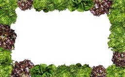 Fresh Salad photo frame isolated Royalty Free Stock Images