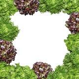 Fresh Salad photo frame isolated Stock Photos