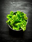 Fresh salad in a pot. Royalty Free Stock Image