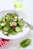Fresh salad with radish. On white plate Stock Image