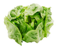 Fresh salad romaine lettuce. Isolated on white background. Top view. Design element for product label Royalty Free Stock Photo