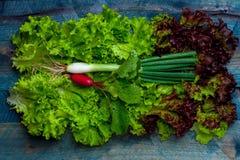 Fresh salad scallion and radish. Fresh lollo rosso salad scallion and red radish on wooden table background Royalty Free Stock Photography