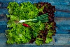 Fresh salad scallion and radish. Fresh lollo rosso salad scallion and red radish on wooden table background Stock Photos