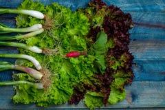 Fresh salad scallions and radish. Fresh lollo rosso salad scallions and red radish on wooden table background Stock Photo