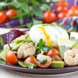 Fresh salad with shrimps, tomatoes, herbs, avocado, poached egg Royalty Free Stock Image