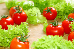Fresh salad and a  tomato Stock Images