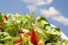 Fresh salad and tomato Royalty Free Stock Image