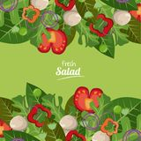 Fresh salad vegetables organic delicious food royalty free illustration