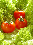 Fresh Salad With Tomatoes Stock Photo