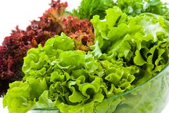 Fresh salads. Some bunches of fresh salads in a glass bowl stock image