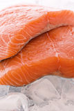 Fresh Salmon. Fresh pieces of salmon as closeup on ice cubes Stock Photo