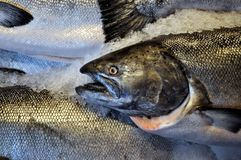 Fresh Salmon. At a market Royalty Free Stock Images
