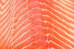 Fresh salmon. Extreme close-up view of fresh salmon Stock Image