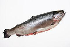 Fresh salmon. Stock Images