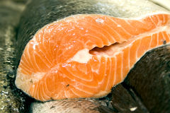 Fresh salmon. Rows of fresh salmon at the fish market Stock Photography