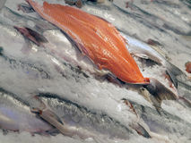 Fresh salmon. Salmon fillet and whole fish on farm market booth Stock Image