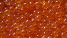 Fresh salmon caviar. UHD of the fresh salmon red caviar on the rotating stand, top view stock video footage