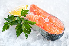 Fresh salmon fillet. With parsley and lemon slices on ice Royalty Free Stock Images