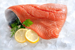 Fresh salmon fillet. With parsley and lemon slices on ice Royalty Free Stock Photo