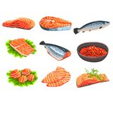 Fresh salmon fish set, fillet, steak and caviar, seafood product vector Illustrations on a white background. Fresh salmon fish set, fillet, steak and caviar Stock Photos