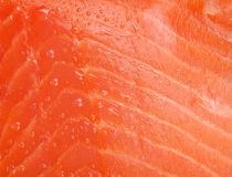 Fresh salmon fish texture royalty free stock images