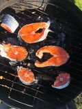 Fresh salmon on the grill in the garden royalty free stock photos