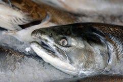 Fresh salmon on ice. At the Farmer's Market Stock Photos