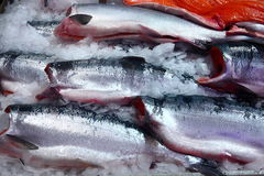 Fresh Salmon in a market Royalty Free Stock Photos