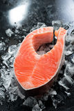 Fresh salmon steak on ice. Vertical Stock Photos