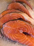 Fresh salmon steaks for sale at fish market. Atlantic salmon, Salmo salar, steaks for sale at fish market royalty free stock image