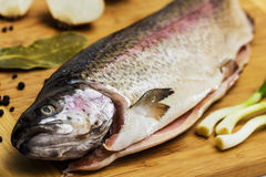 Fresh Salmon trout Stock Images