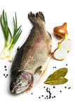 Fresh Salmon trout Stock Image