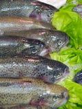Fresh salmons Stock Photo