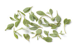 Fresh saltbush leaves Stock Images