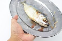 Fresh salted mackerel on the long aluminum dish. In kitchen background Royalty Free Stock Image