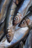 Fresh saltwater fish. Royalty Free Stock Photography