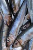 Fresh saltwater fish. Stock Photo