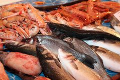 Fresh saltwater fish for sale in fish market in southern Italy Stock Image