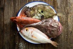 Fresh saltwater fish Royalty Free Stock Photo
